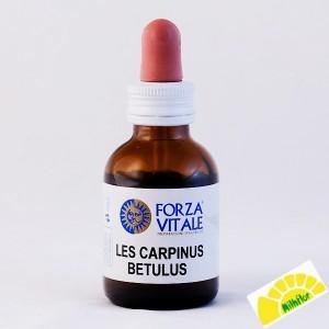 LES CARPINUS BETULUS